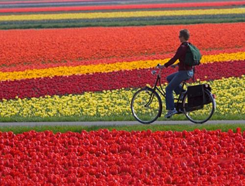 Амстердам - велосипедный город